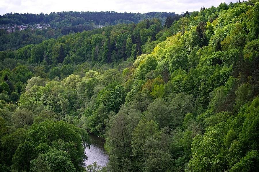 Павильнисский ландшафтный парк: фото, адрес, описание