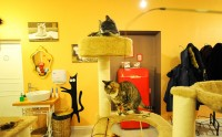 Интерьер Cat Cafe в Вильнюсе